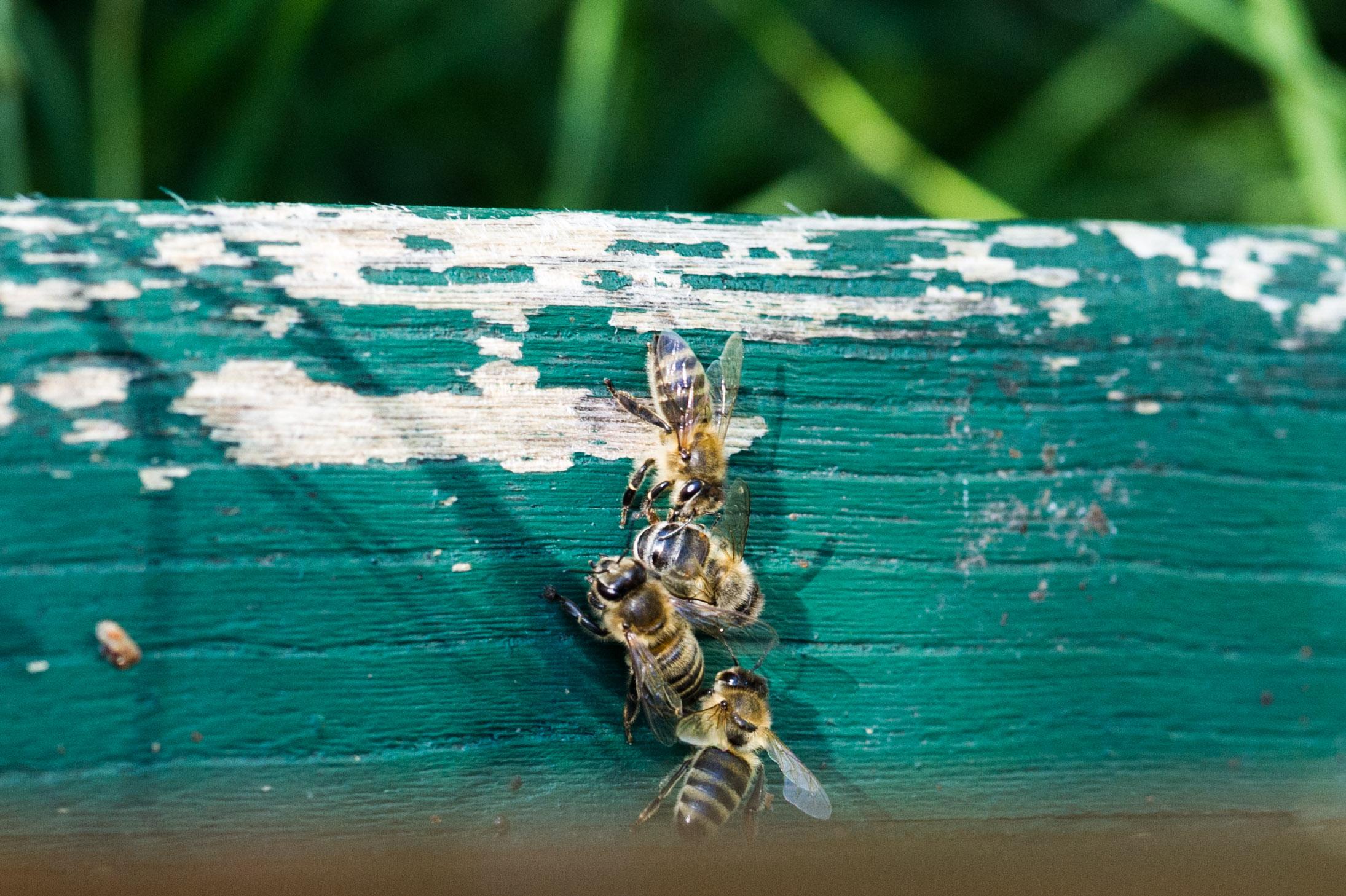 Bienen auf der Startrampe