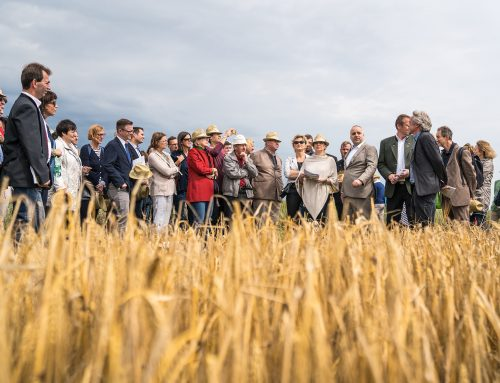 Organic field days 2018
