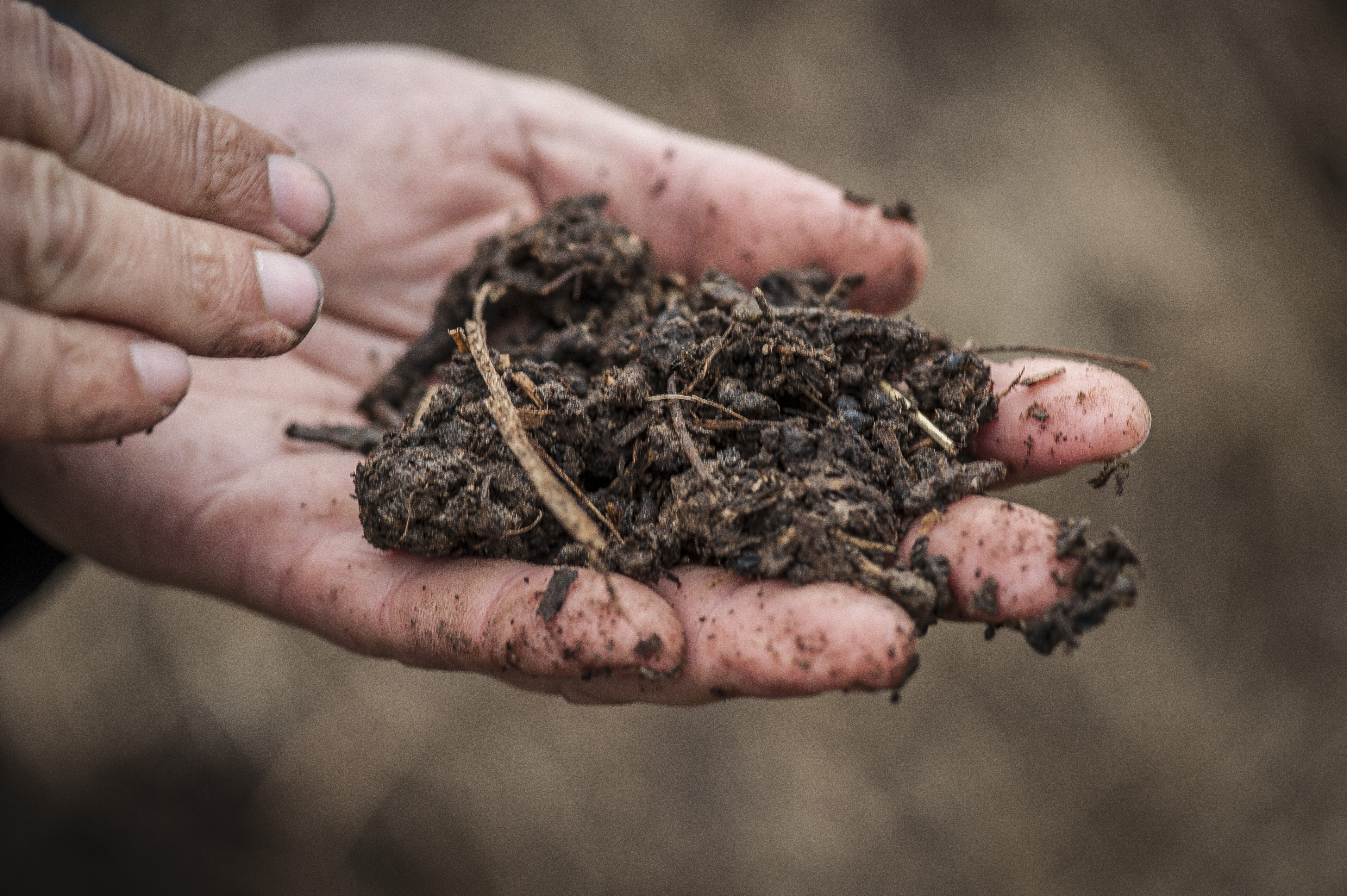 Gesunder Boden - Die Suche nach dem Regenwurm